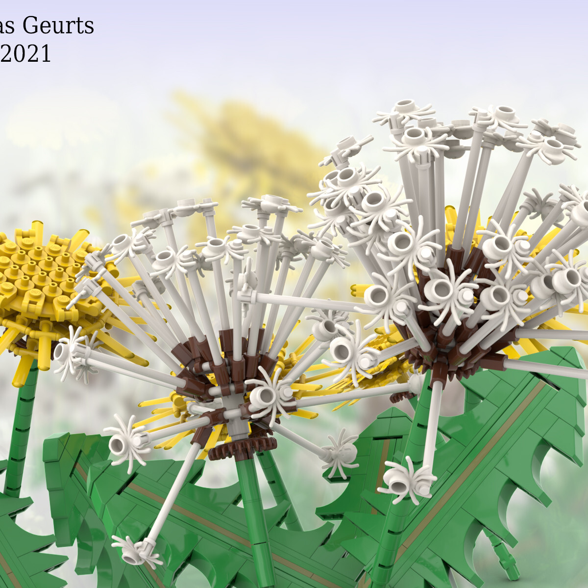 dandelion-f.jpg
