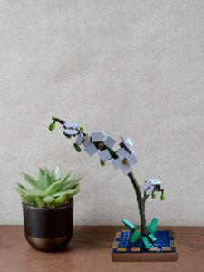 orchideeeee1.jpg