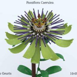 passion flower plant_2f.jpg